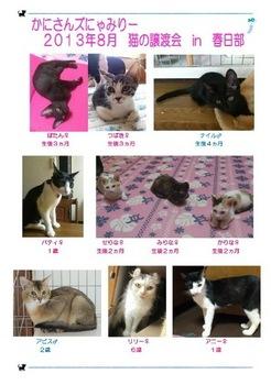 2013年8月にゃみりー春日部参加猫.jpg